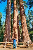 Man Admires Giant Sequoias Grant Grove Kings Canyon National Park