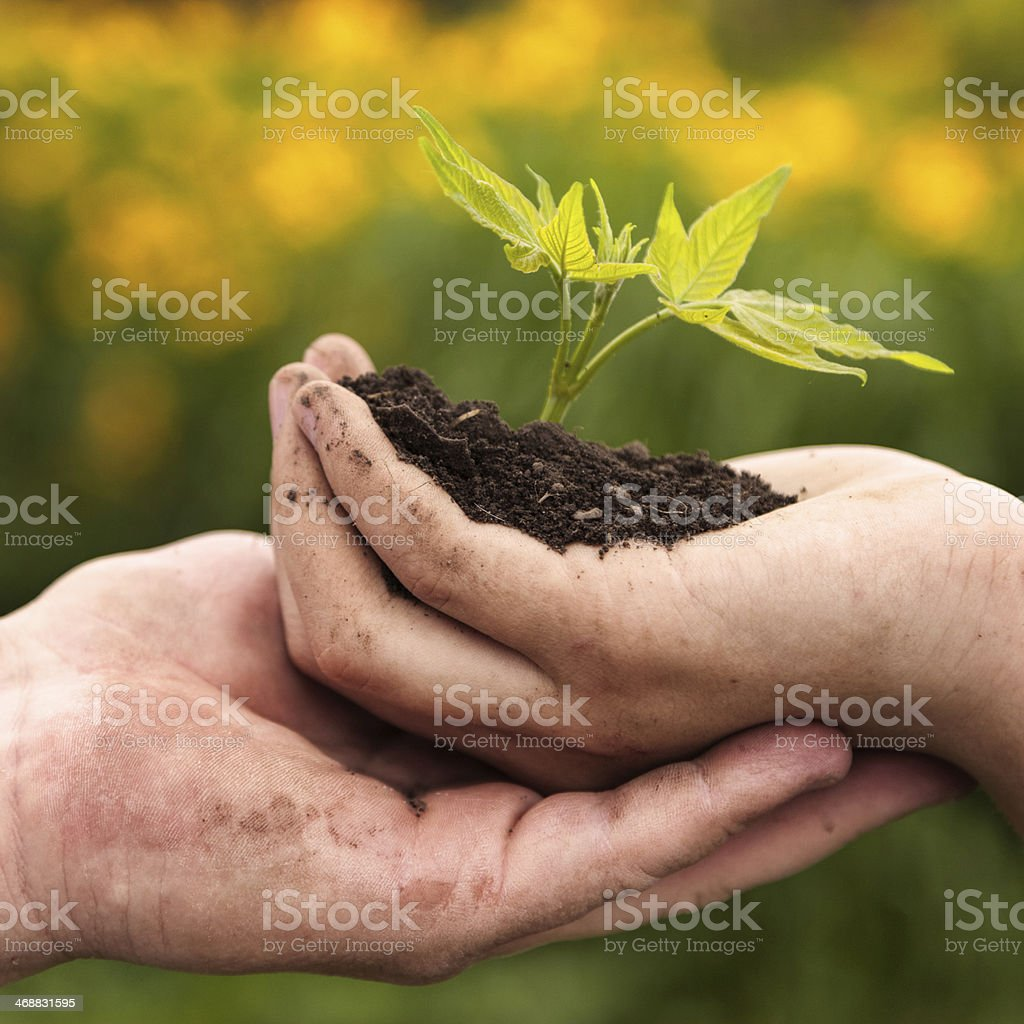man and boy holding green plant in hands. royalty-free stock photo