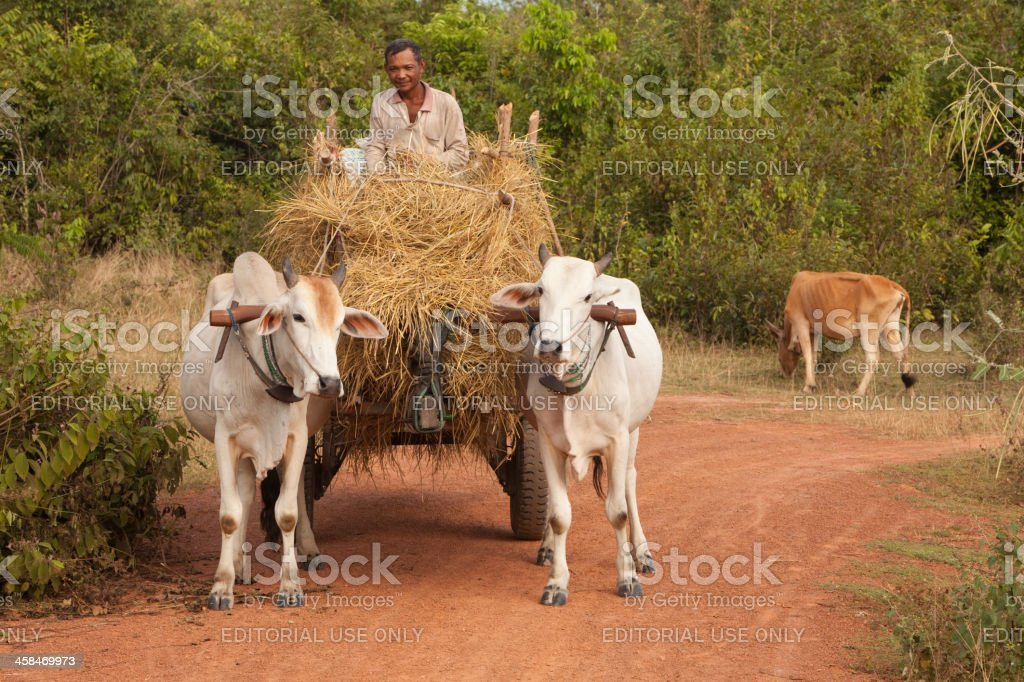 Man and Cart full of hay stock photo