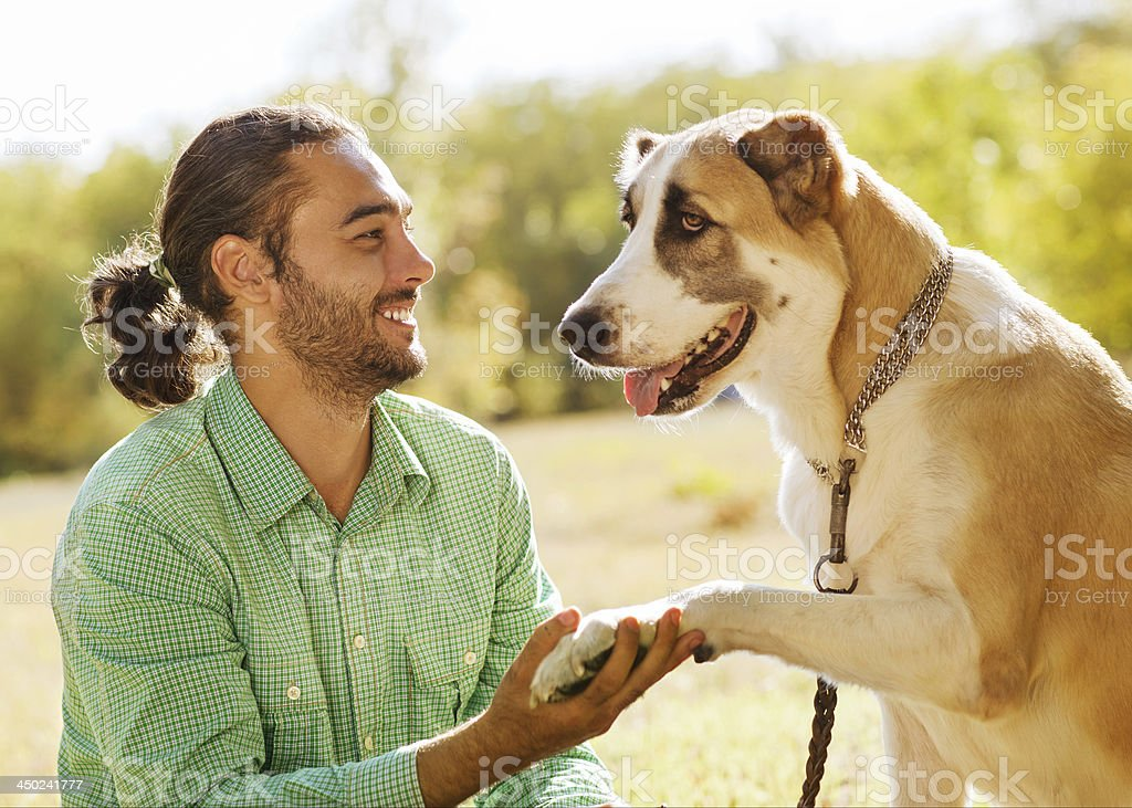 Man and central Asian shepherd walk in the park. royalty-free stock photo