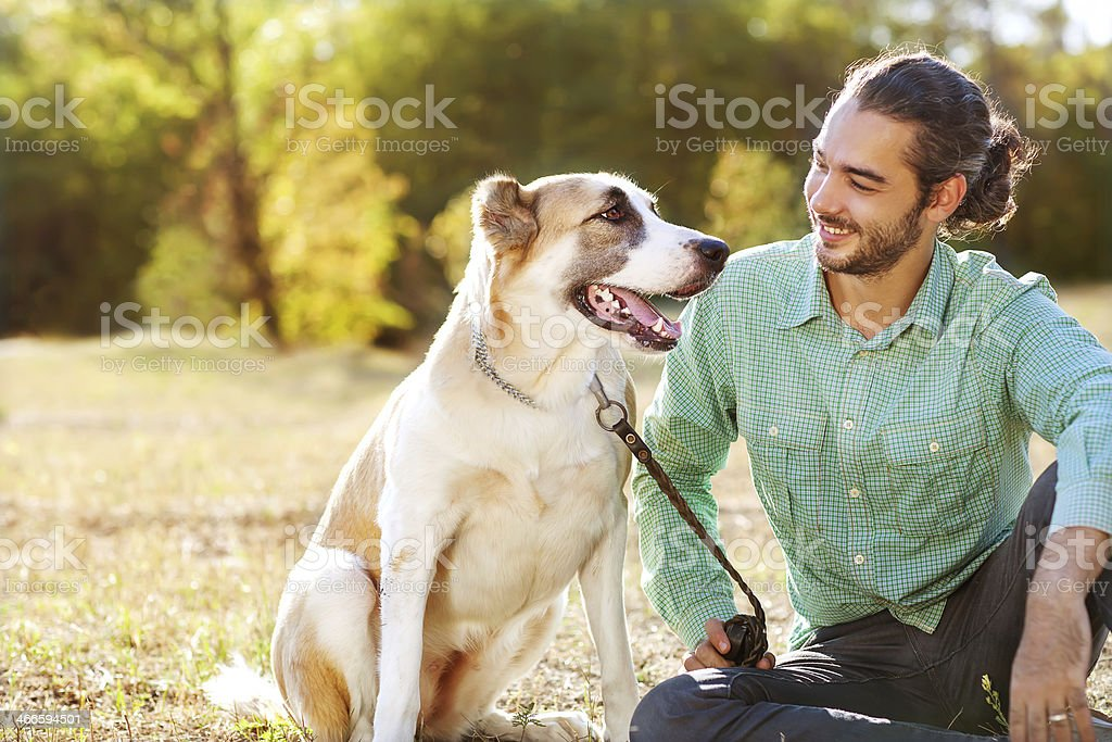 Man and central Asian shepherd walk in the park. stock photo