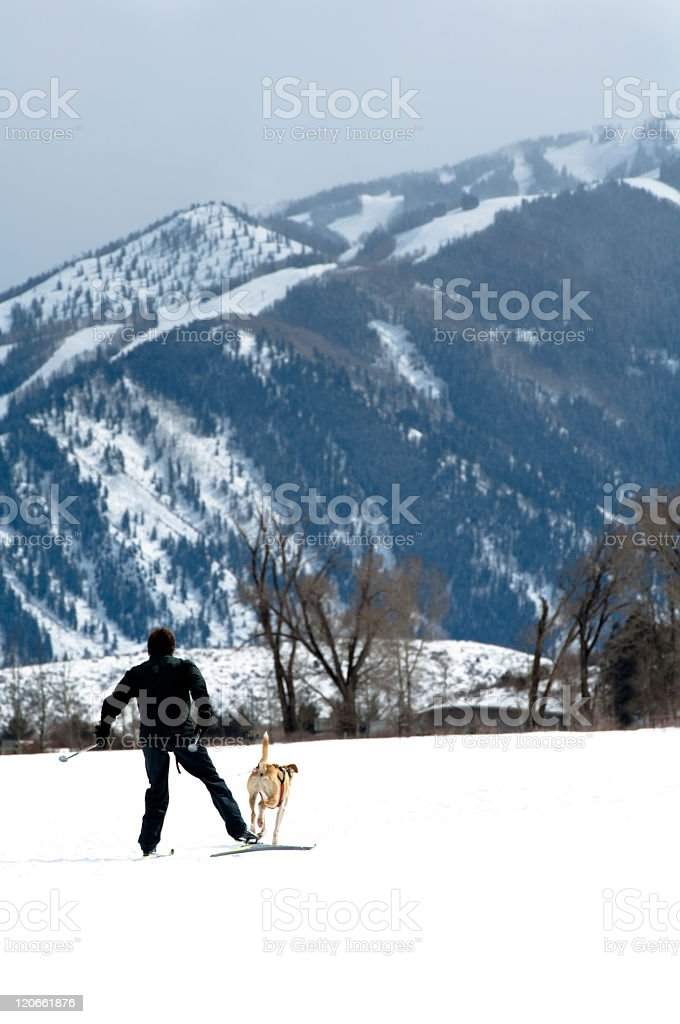 Man and dog skijoring stock photo