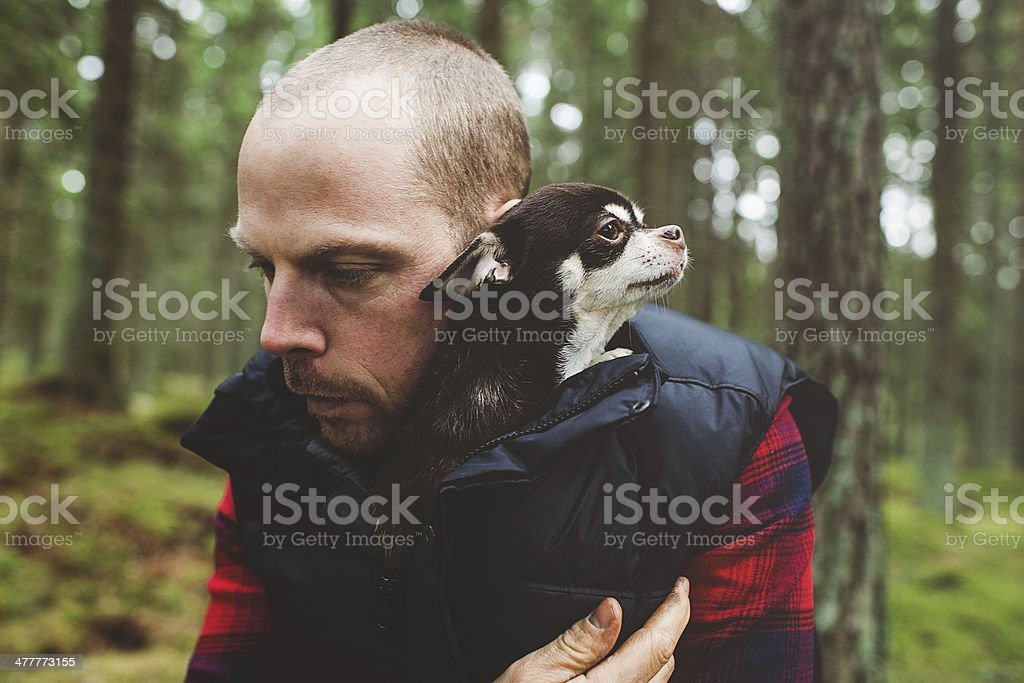 Man and his chihuahua stock photo