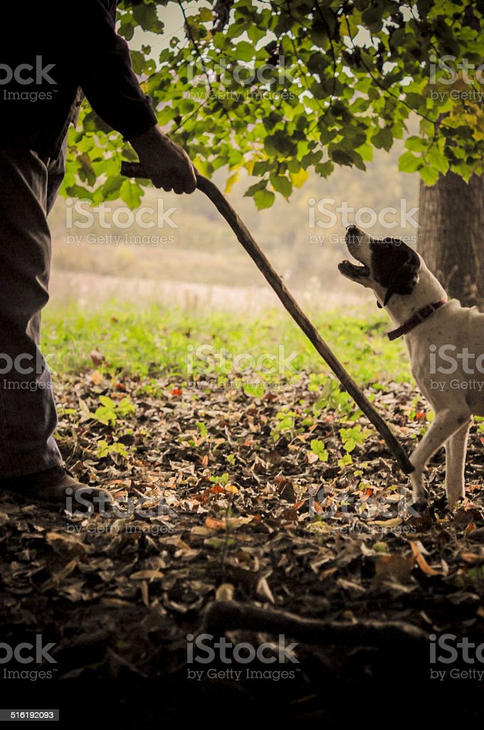Man and his dog searching truffle stock photo