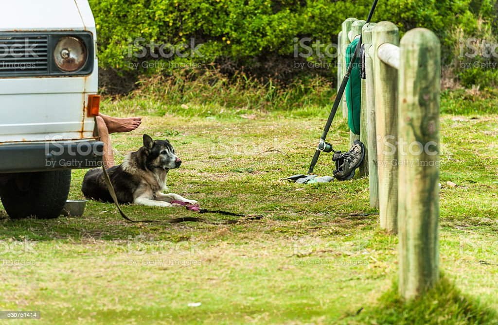Man and his dog take a break. Time-out. stock photo