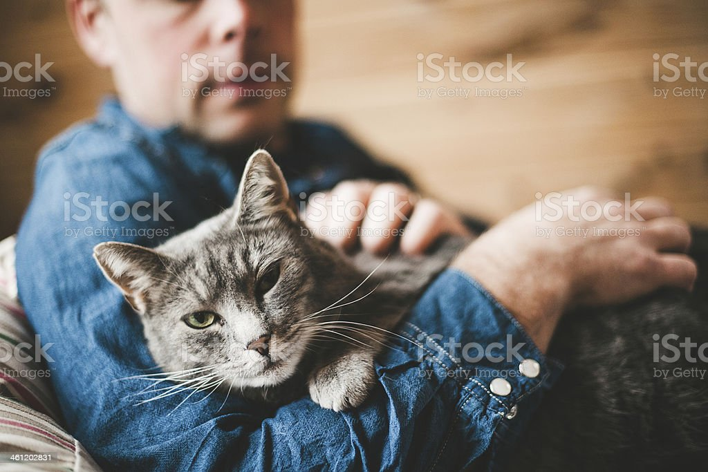 Man and his grey cat stock photo