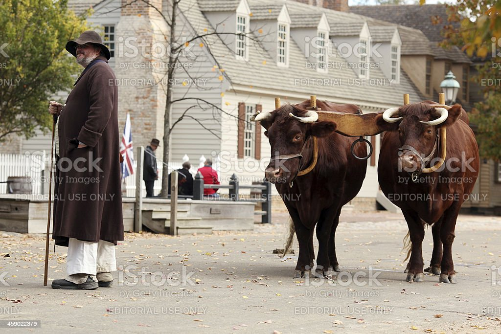 Man and his Oxen stock photo
