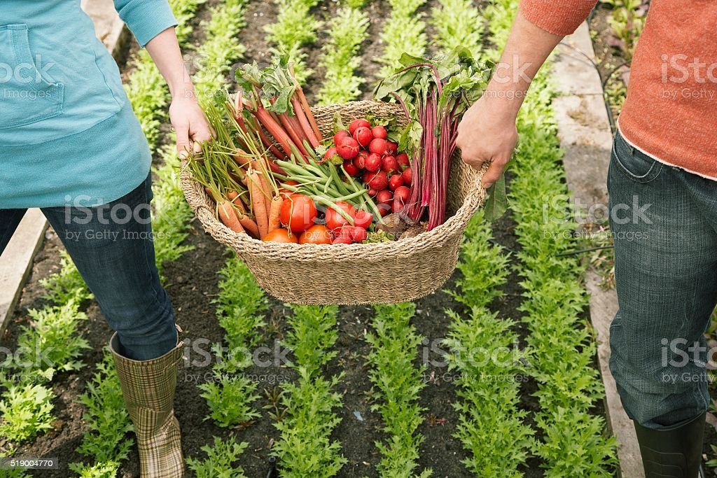 Man and woman carrying vegetables in basket stock photo
