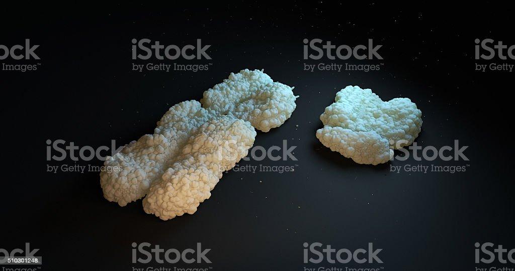 Man and woman chromosomes stock photo