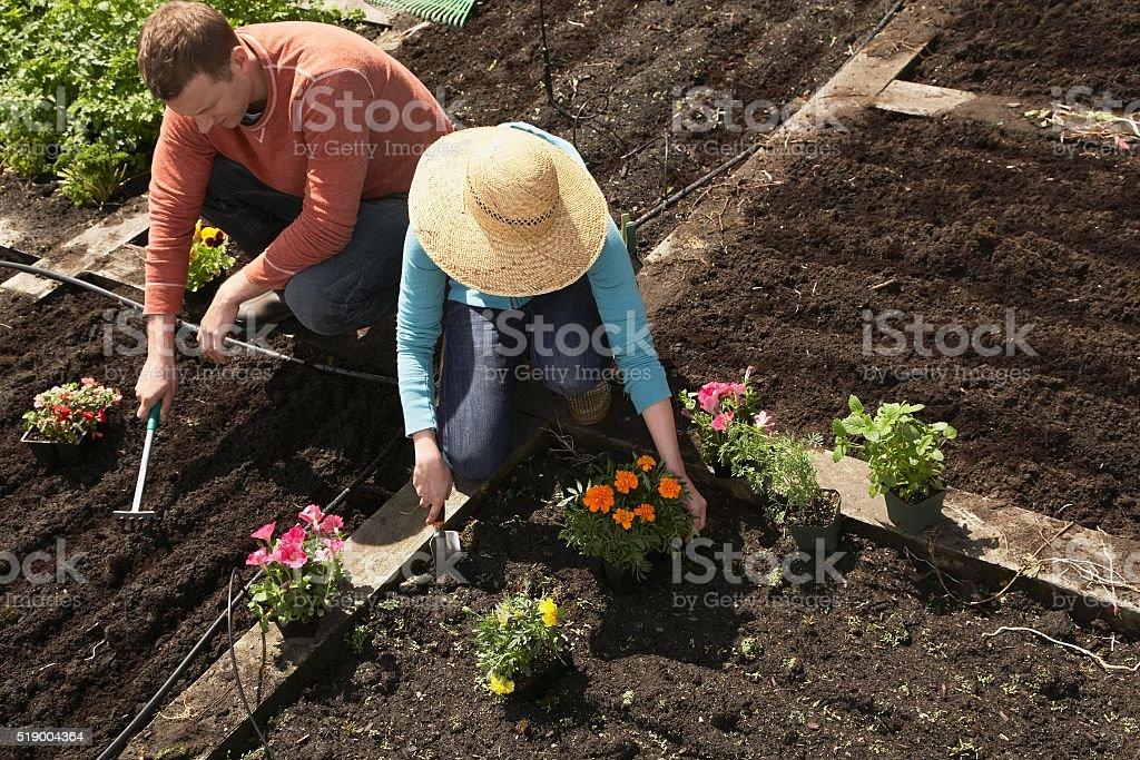 Man and woman gardening stock photo