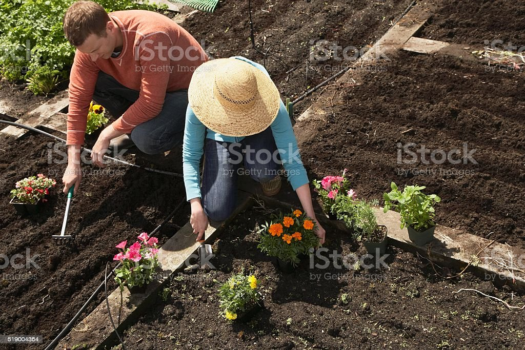 Man and woman gardening stock photo