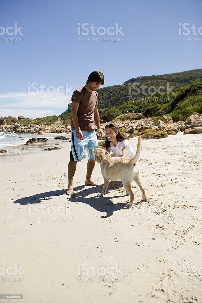 Man and woman on beach with labrador royalty-free stock photo