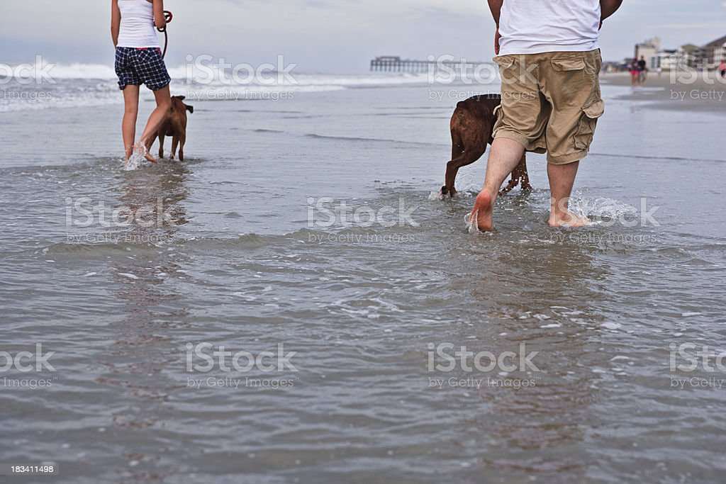 Man and woman walking dogs at the beach royalty-free stock photo