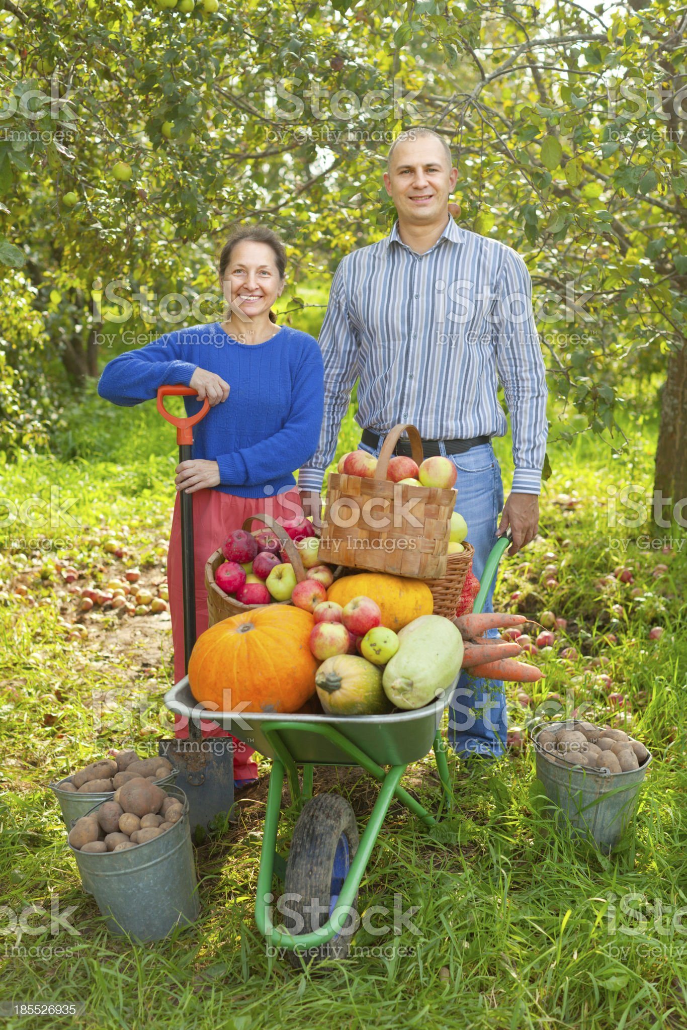 Man and woman  with  harvested vegetables royalty-free stock photo