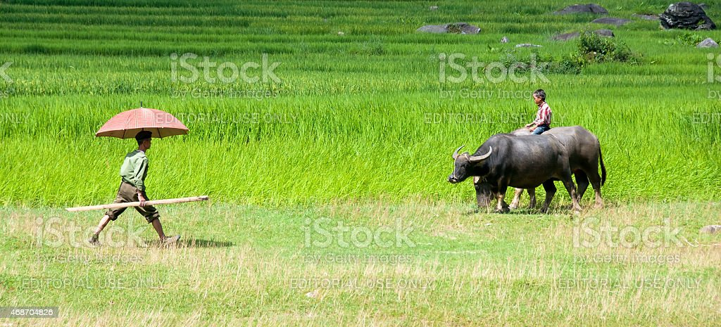 Man and young boy on  field in Sapa, Vietnam stock photo