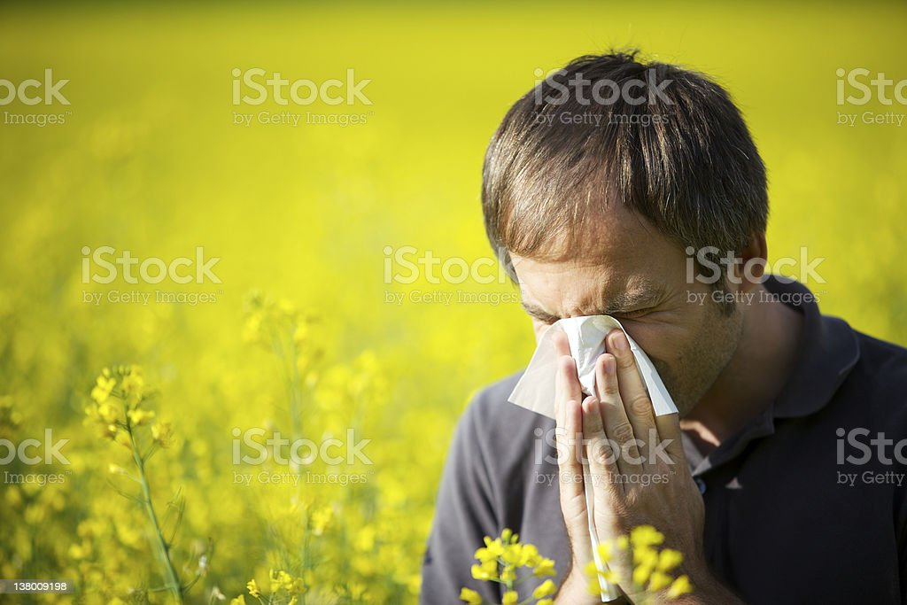 Man blowing his nose in canola field stock photo