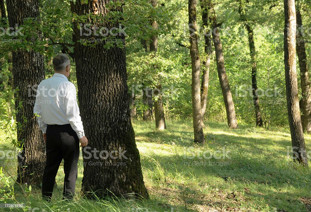 man can't see wood for trees royalty-free stock photo