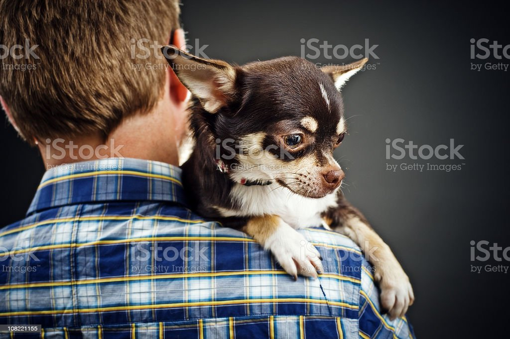 Man Carrying Chihuahua on shoulder stock photo