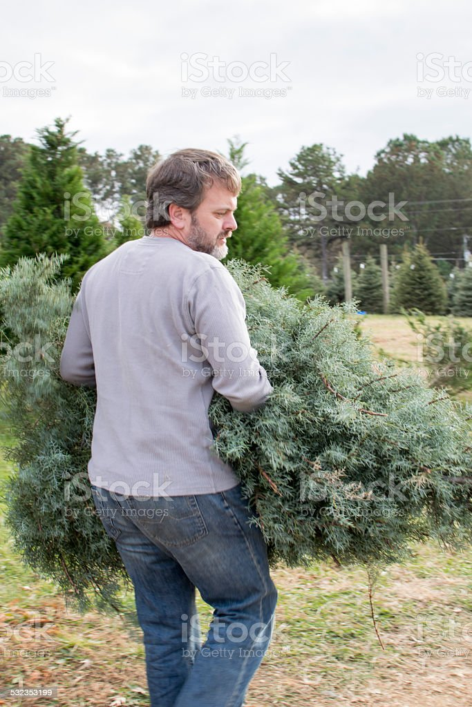 Man carrying Christmas tree stock photo
