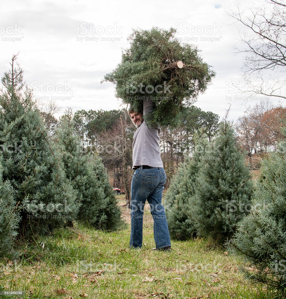 Man carrying freshly cut Christmas tree stock photo