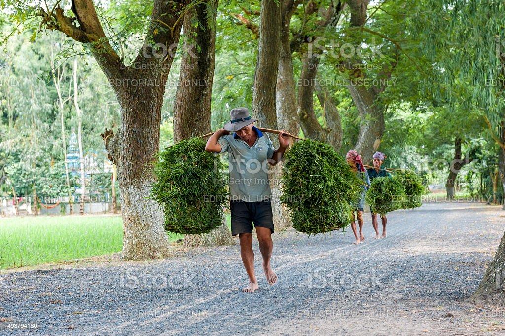 Man carrying shoulder yoke stock photo