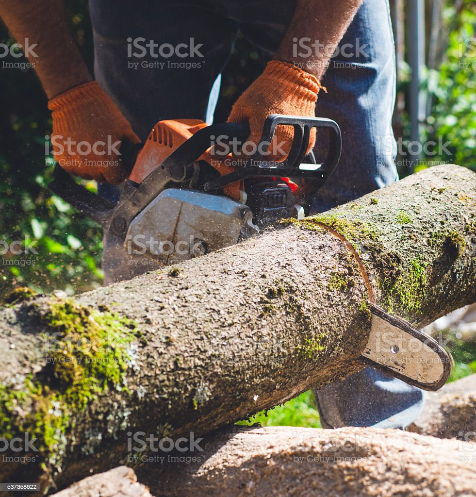 man chops a tree into logs with a chainsaw stock photo