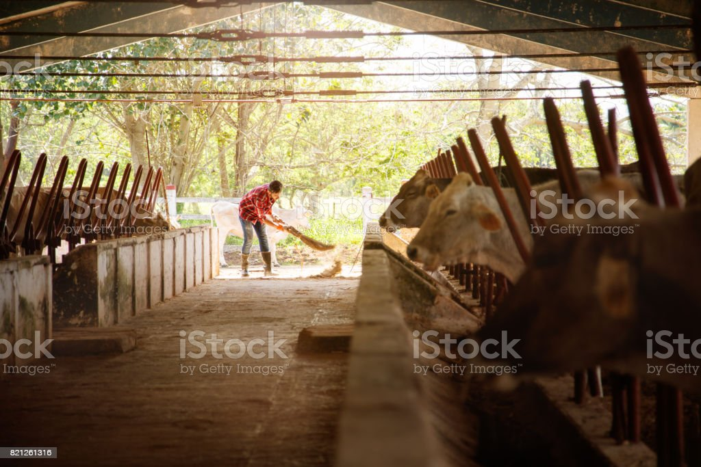 Man Cleaning Farm Farmer Sweeping Stables People In Ranch stock photo