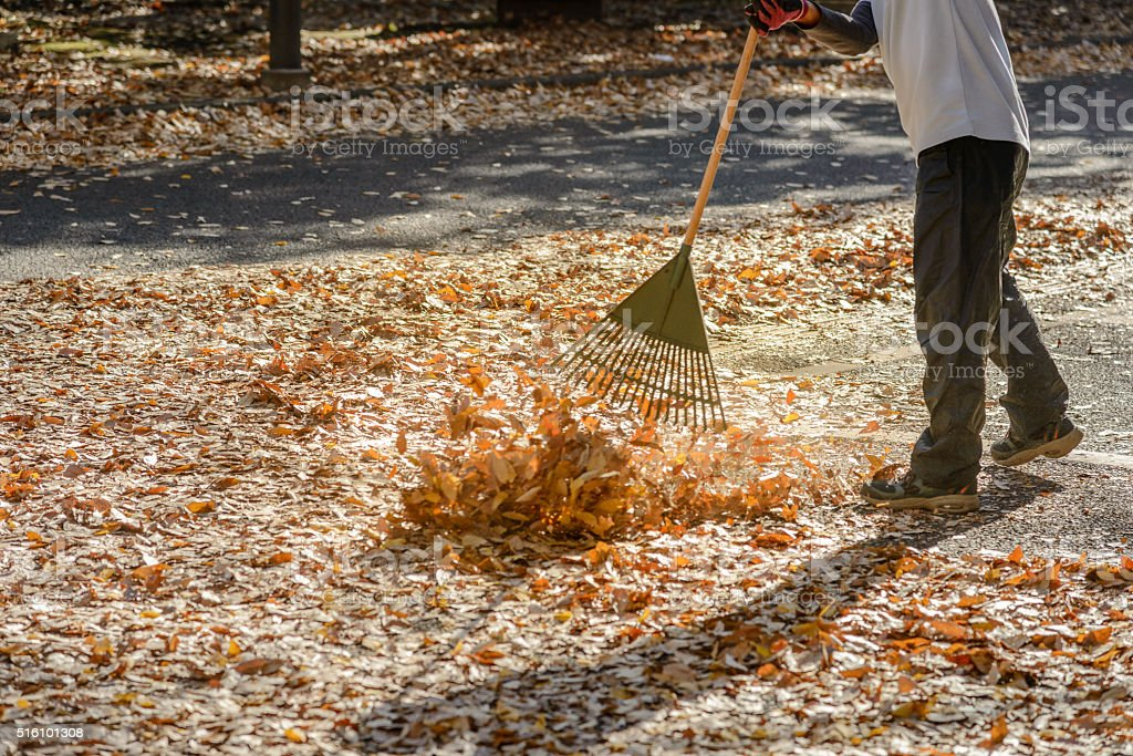 Man cleaning leaves in autumn season stock photo