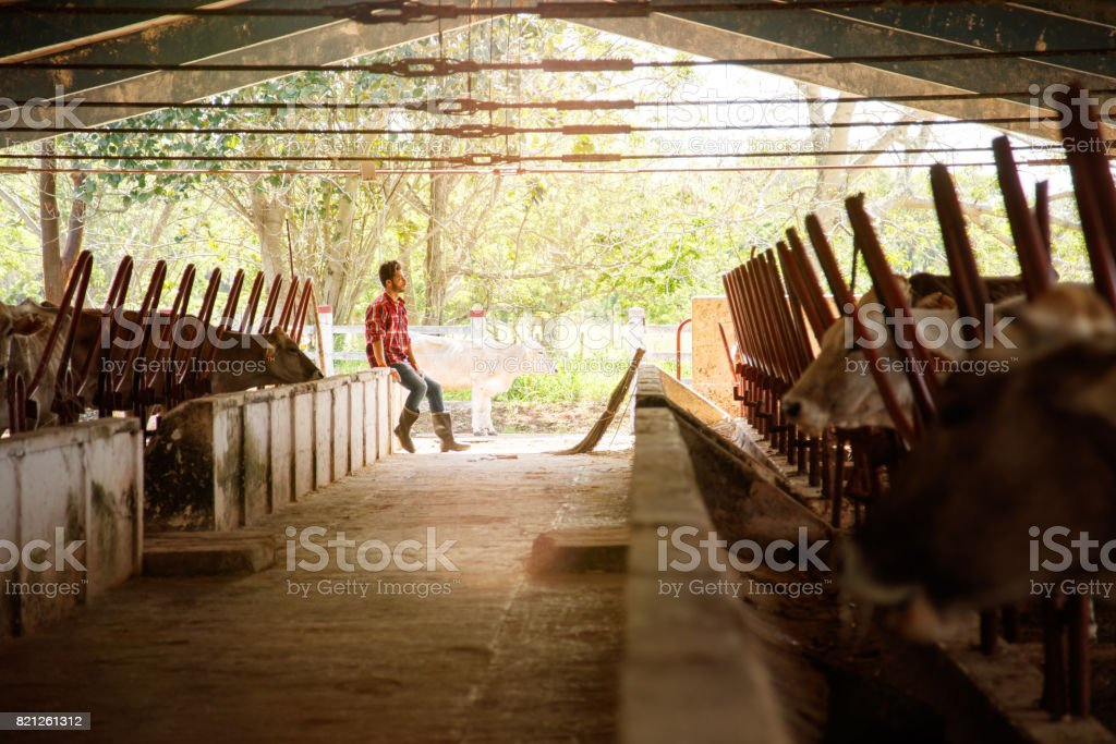 Man Cleaning Stables In Farm Farmer Relaxing On Wall stock photo