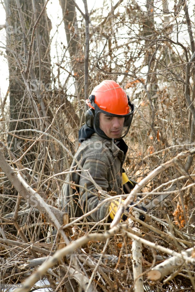 Man Clearing Branches royalty-free stock photo