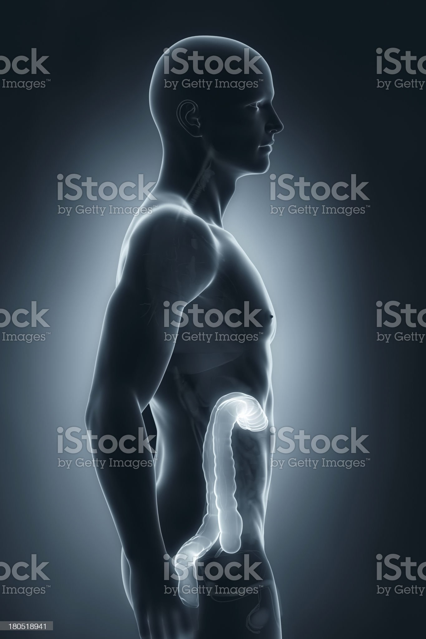 Man colon anatomy lateral view royalty-free stock photo