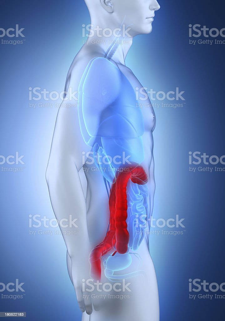 Man colon anatomy lateral view stock photo