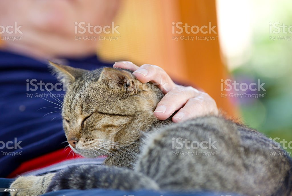 Man cuddling cat stock photo