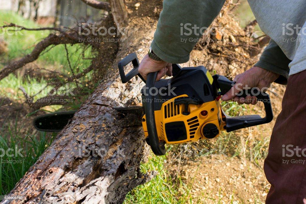Man cuts a fallen tree stock photo