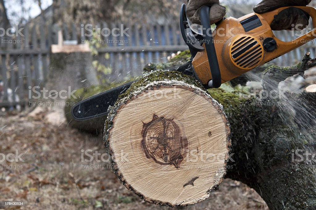 man cuts tree with electric saw royalty-free stock photo