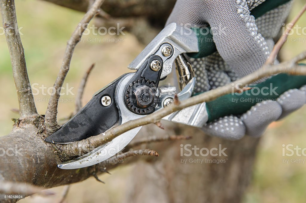Man cutting branches. stock photo