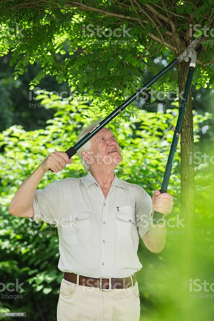 Man cutting tree branches stock photo