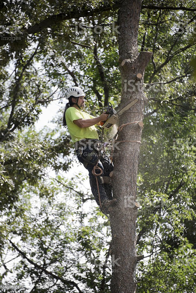 Man Cutting Tree royalty-free stock photo