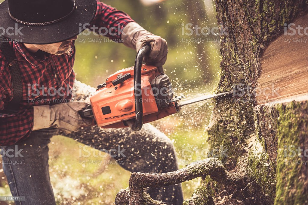 Man cutting tree stock photo
