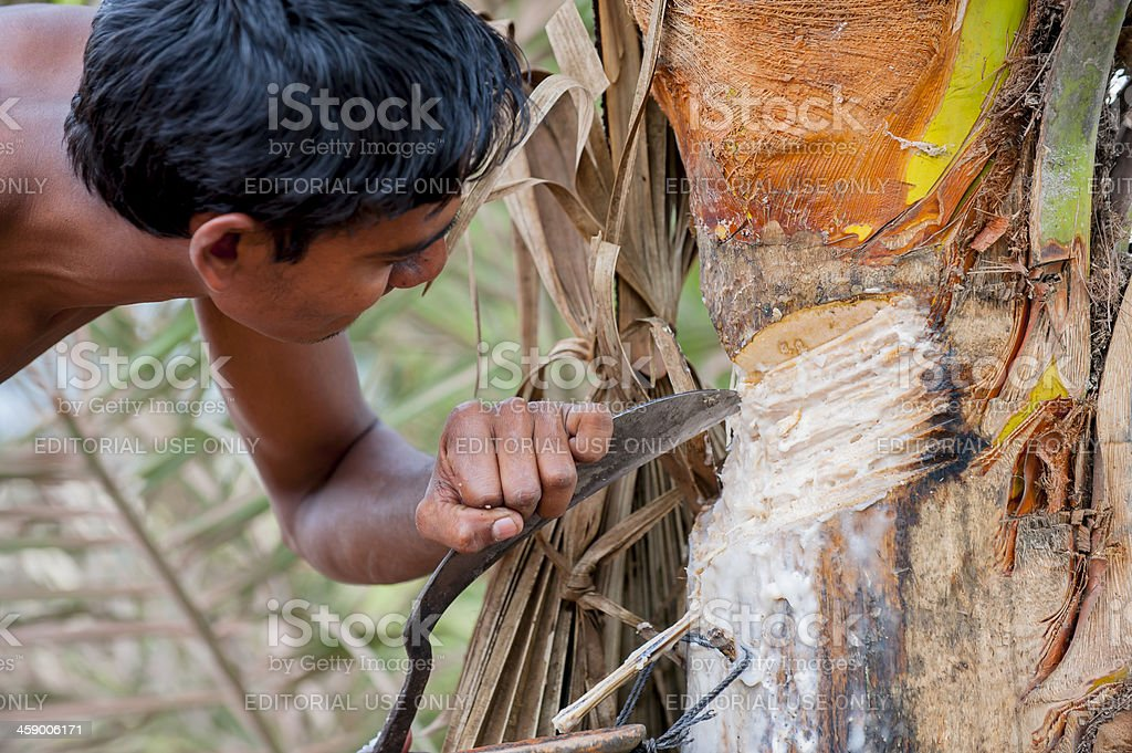 Man cutting tree taking gum stock photo