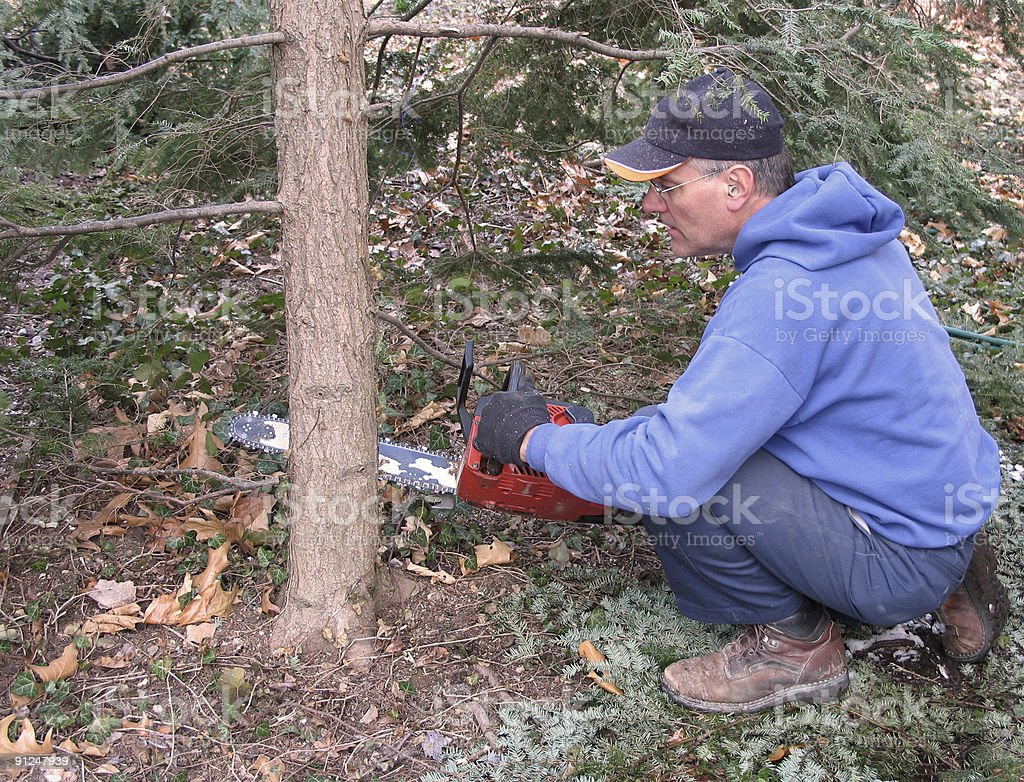 Man cutting tree with chainsaw royalty-free stock photo