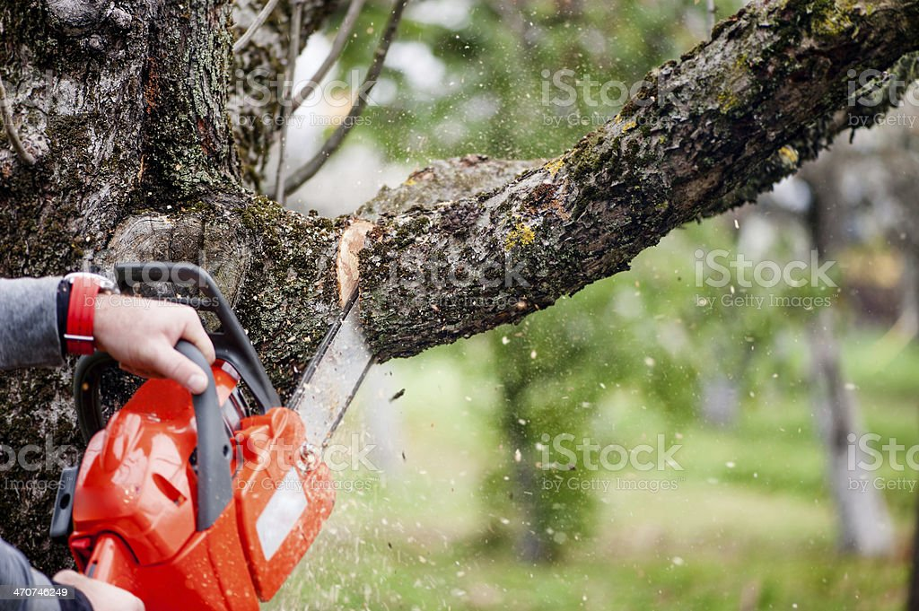 man cutting trees using an electrical chainsaw and professional stock photo