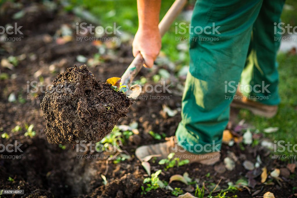 Man digging the garden soil with a spud stock photo
