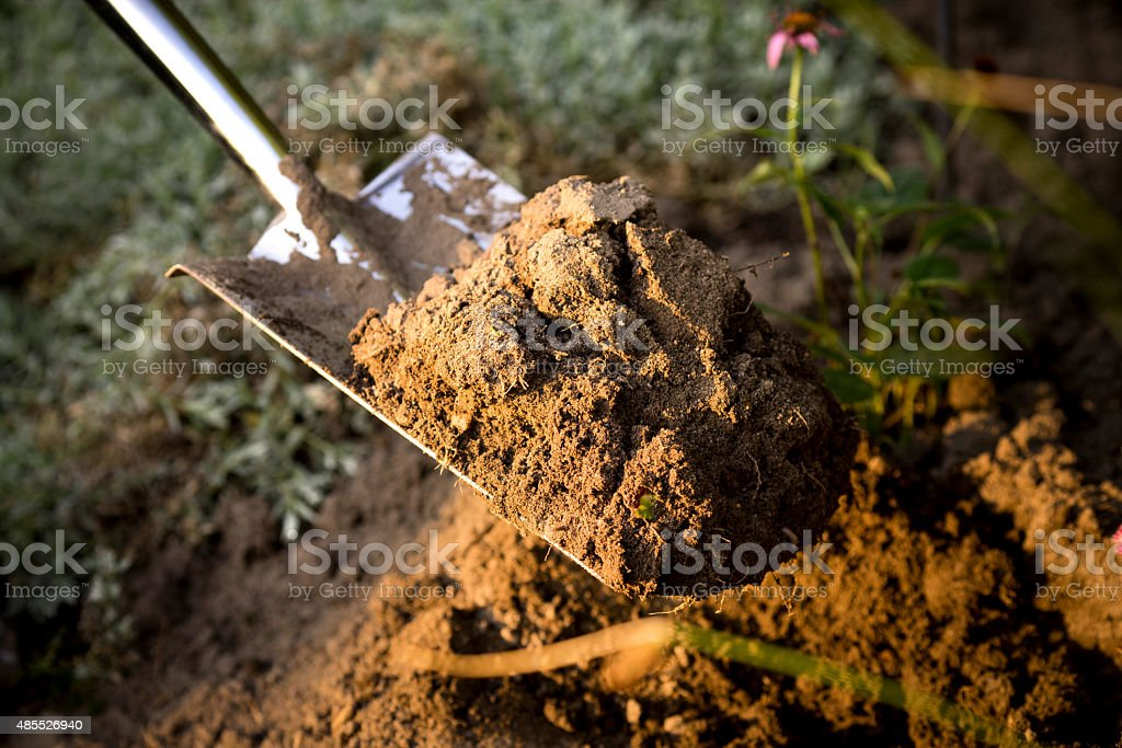 Man digs a hole with shovel at sunset stock photo
