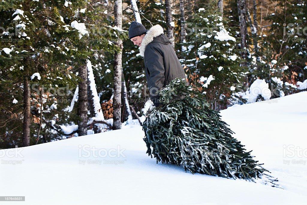 Man dragging Christmas tree through snow stock photo