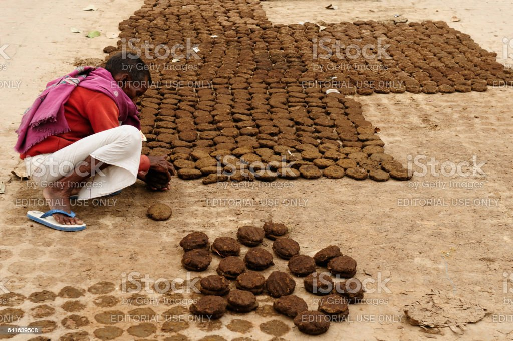 Man drying the cow dung stock photo