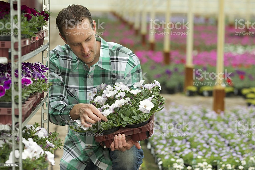 Man Examining Flower Plant In Greenhouse royalty-free stock photo