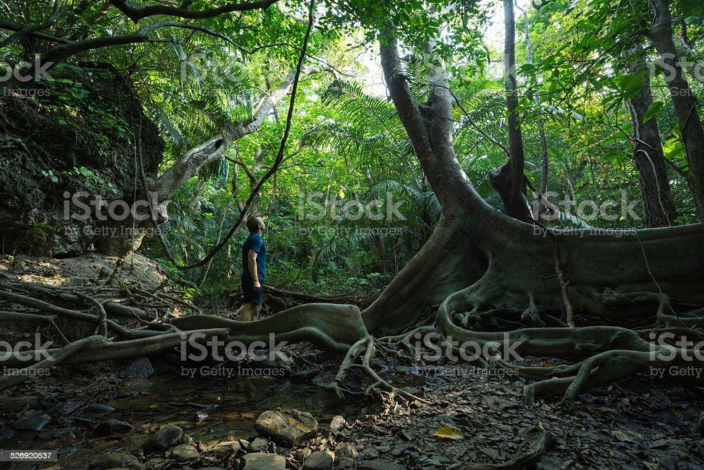 Mann im Dschungel erkunden, steht neben dem großen, alten Baum Lizenzfreies stock-foto