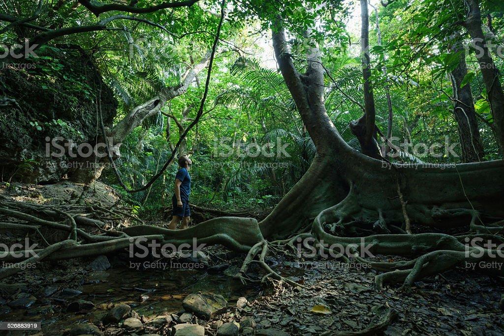 Mann zu tropischen Dschungel mit großer alter Baum Lizenzfreies stock-foto