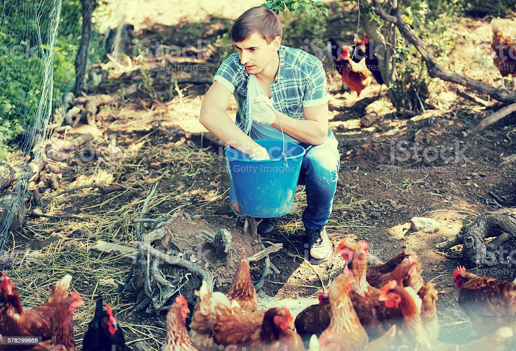man farmer strewing bird forage on country yard with chickens stock photo